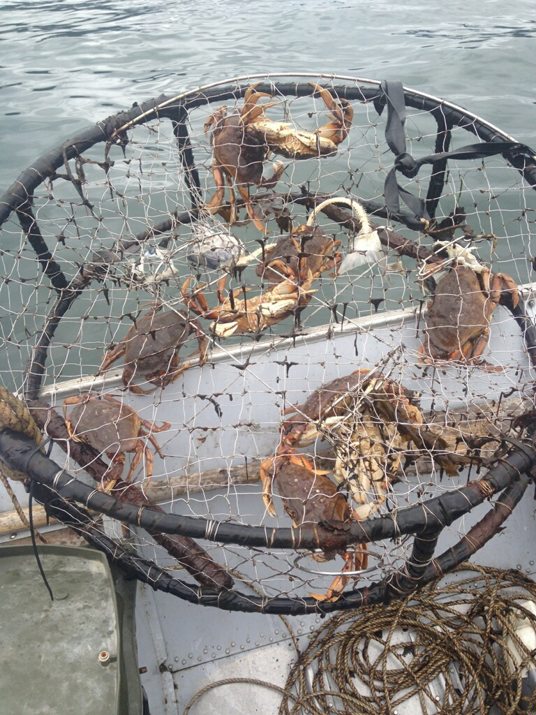 crabs caught in cage