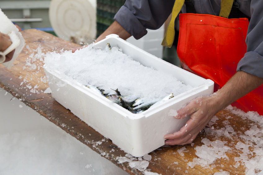 How to Store Freshly Caught Fish